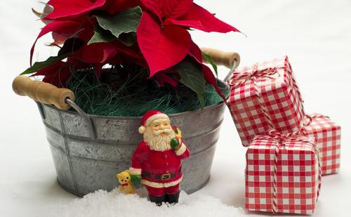 Eco-Friendly Christmas Presents