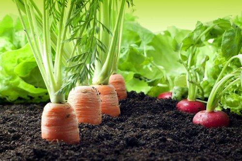 Making Money Growing Vegetables