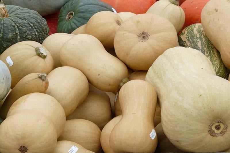 Fall Vegetables Pumpkin