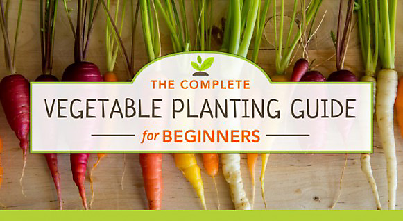 The Complete Vegetable Planting Guide for Beginners