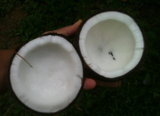 How does coconut oil affect health?, coconut oil benefits for skin, coconut oil benefits and side effects, coconut oil benefits for hair, coconut oil weight loss, how to eat coconut oil, coconut oil benefits mayo clinic, coconut oil for teeth, how to use coconut oil,