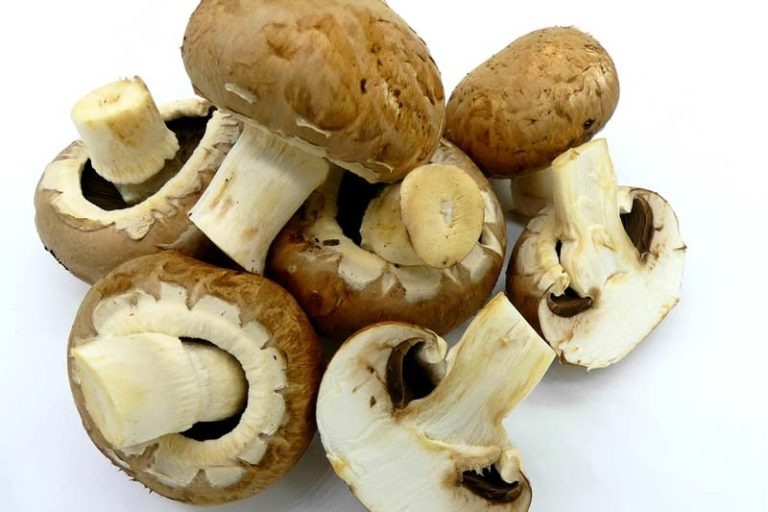 Can Vegans Eat Mushrooms, are fungi vegan, can vegans eat fungus, mushroom is plant or animal, is mushroom vegetable, do mushrooms feel pain, is mushroom a vegetable or meat, should humans eat mushrooms, do mushrooms have a central nervous system, are mushrooms unhealthy, eating mushrooms good or bad for you, mushroom good or bad for health, are psychedelic mushrooms bad for you, mushroom bad effects, are portobello mushrooms bad for you, mushrooms bad stomach, eating mushrooms to get high,