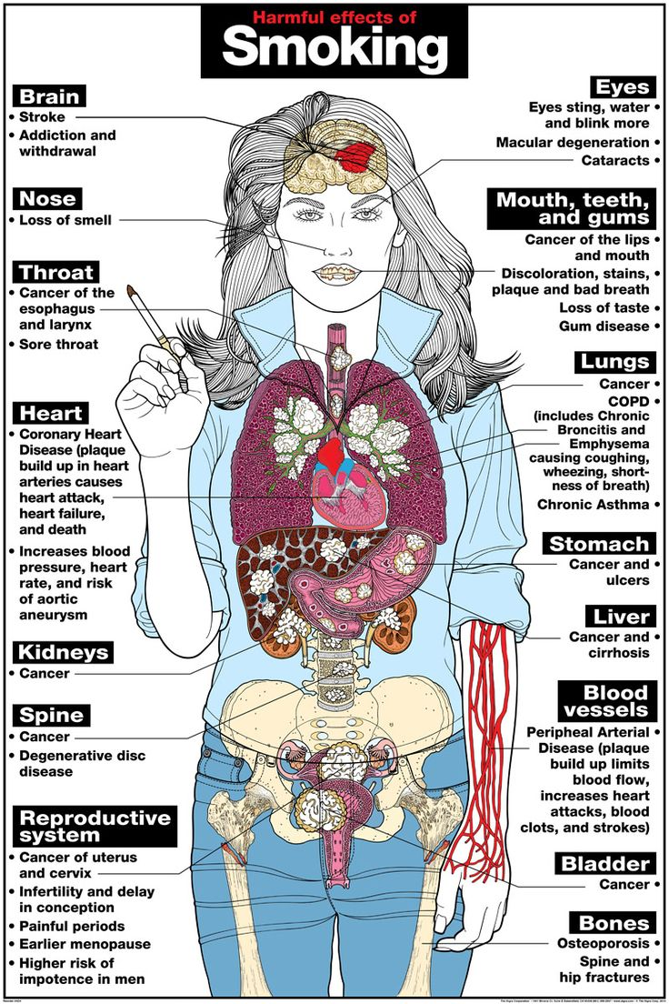 Organs Get Mostly Affected by Smoking