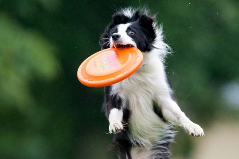 Active Fetch with Dog