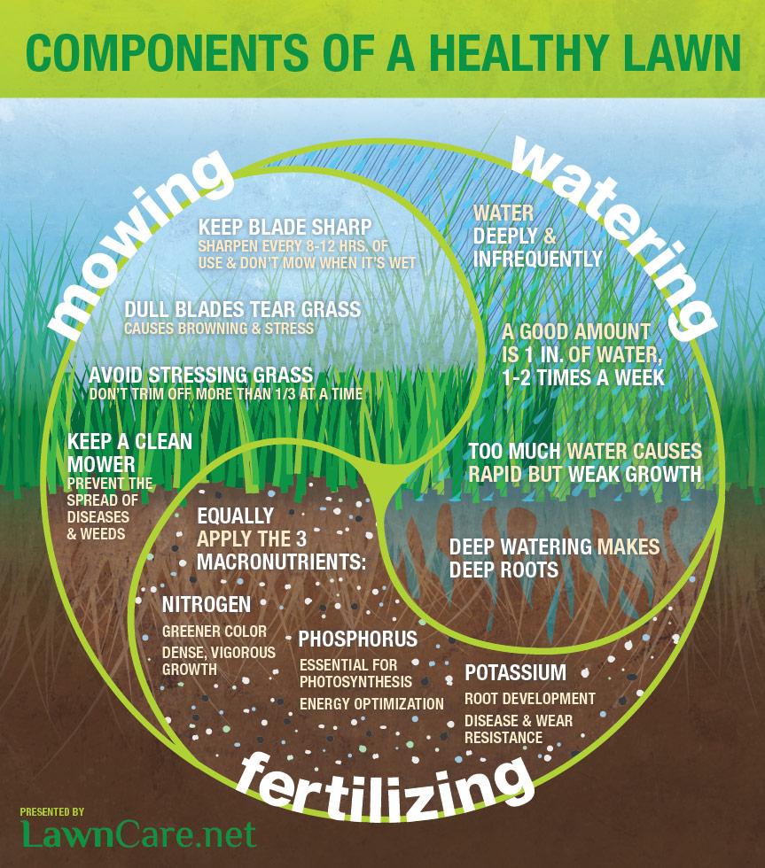Maintain a Healthy Lawn