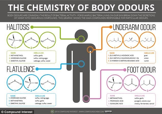 Chemistry of Body Odor