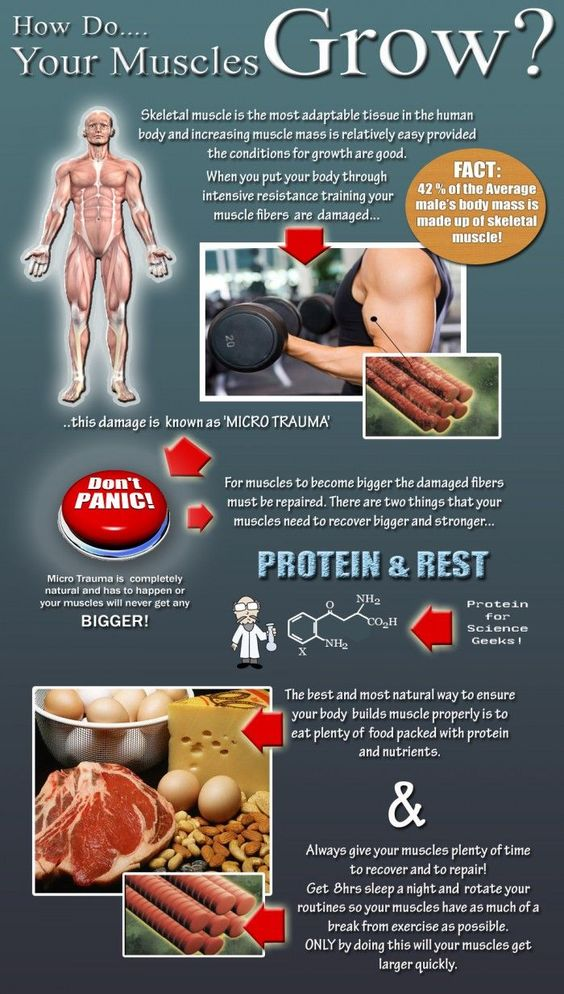 how do your muscle grow