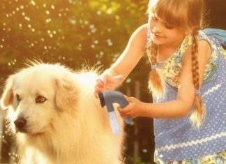 5 Things to Consider When Buying a Pet Vacuum Cleaner, best vacuum cleaner, best vacuum for pet hair, best place to buy a vacuum, best shark vacuum for pet hair, dyson vacuum for pet hair, shark pet vacuum reviews, best canister vacuum for pets, best vacuum for pet hair consumer reports,