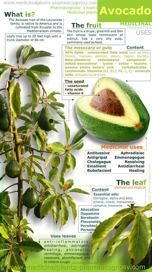 About Avocado