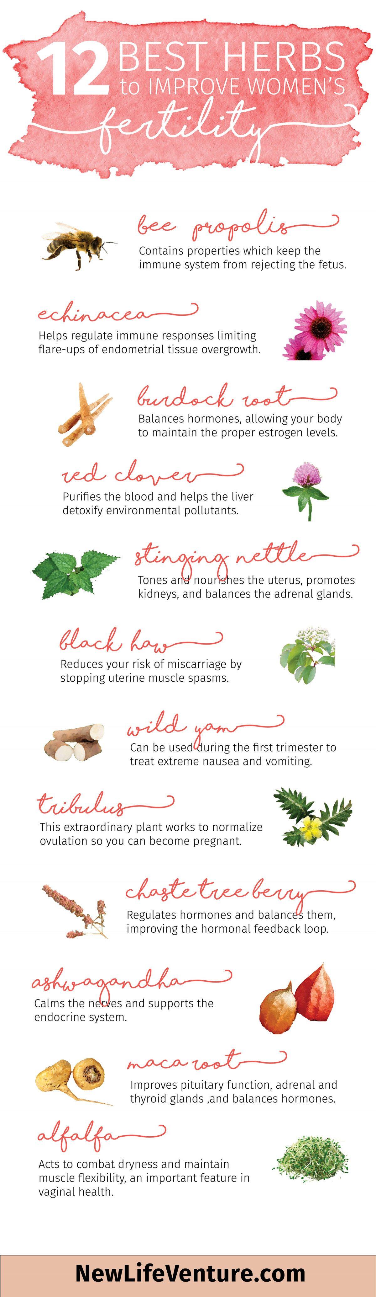 herbs to improve women fertility