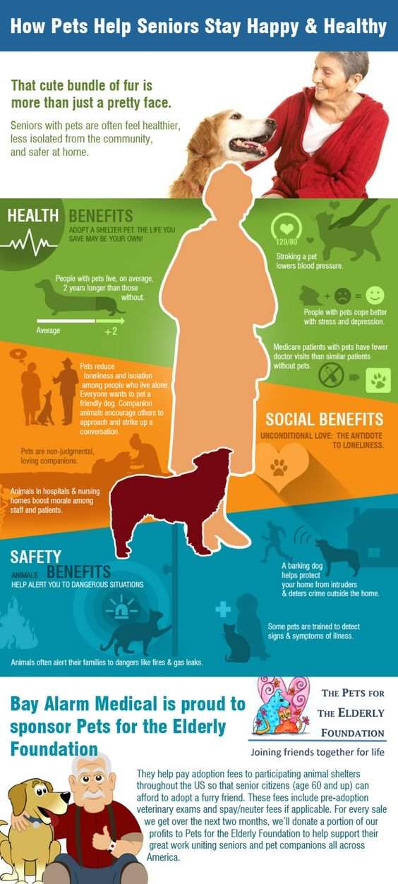 how pets help seniors stay happy and healthy
