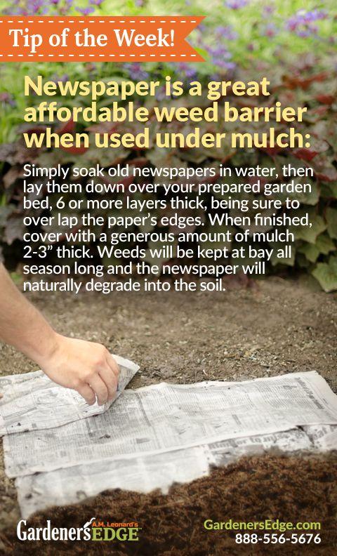 newspaper as weed barrier