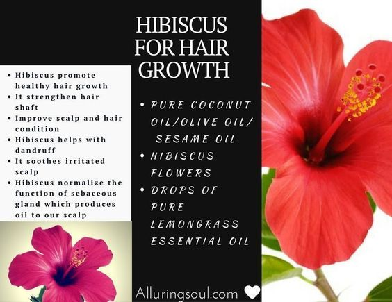 Hibiscus for Hair Growth