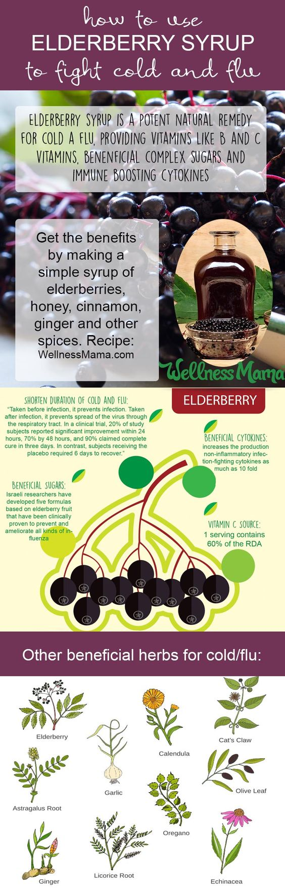 elderberry syrup to fight cold and flu
