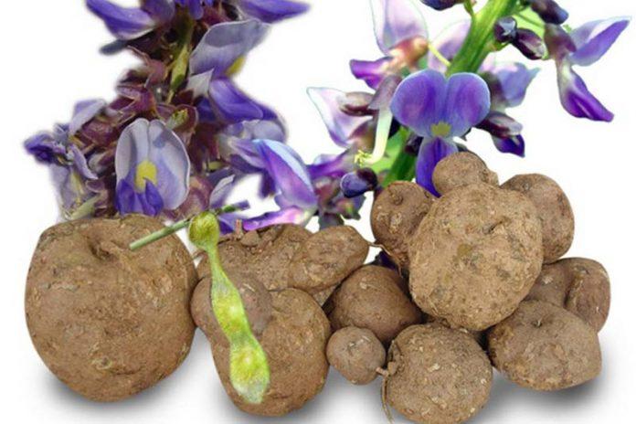 Benefits of Pueraria mirifica