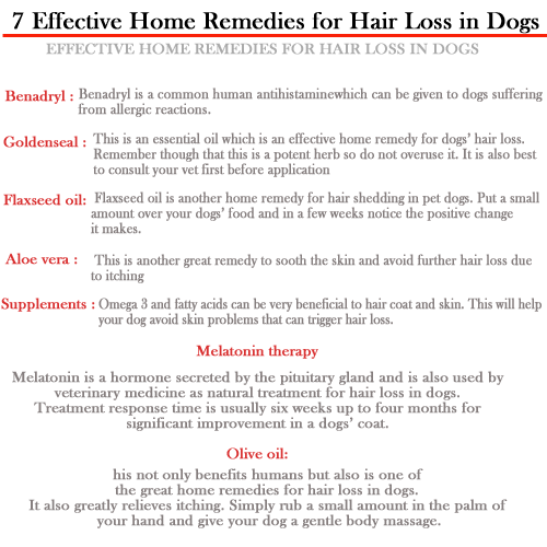 Effective Home Remedies for Hair Loss in Dogs