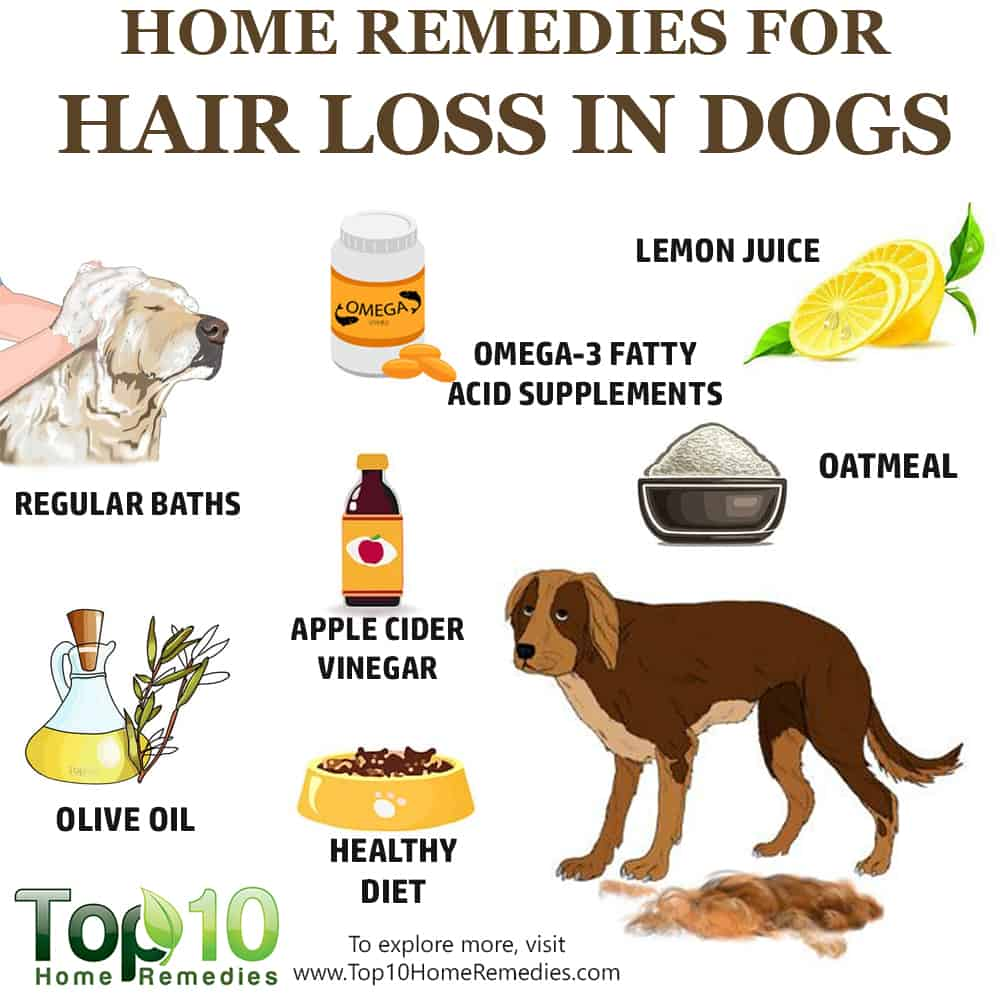 Home Remedies for Hair Loss in Dogs