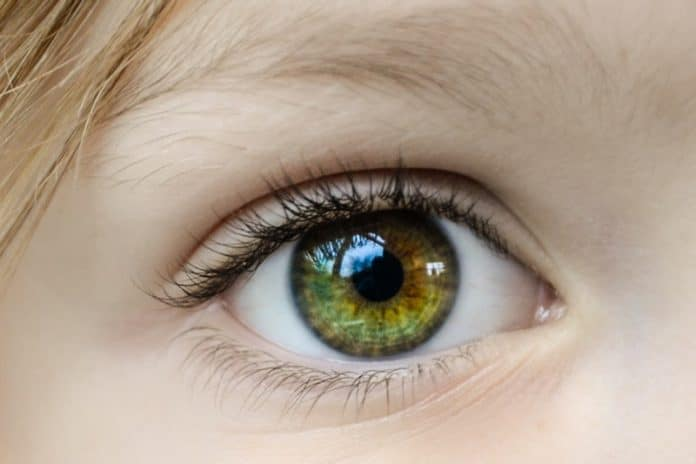 What to Do If You Want to Have Healthy Eyes
