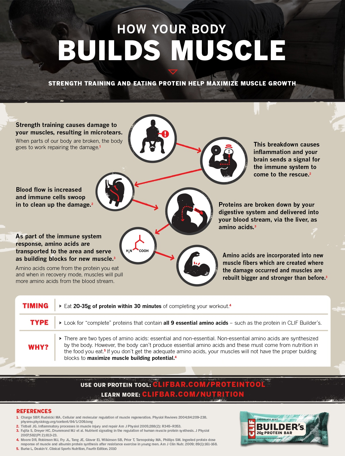 How your body Build Muscle