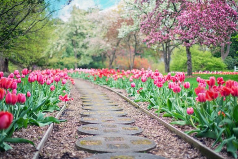 5 Tips To Beautify Your Garden