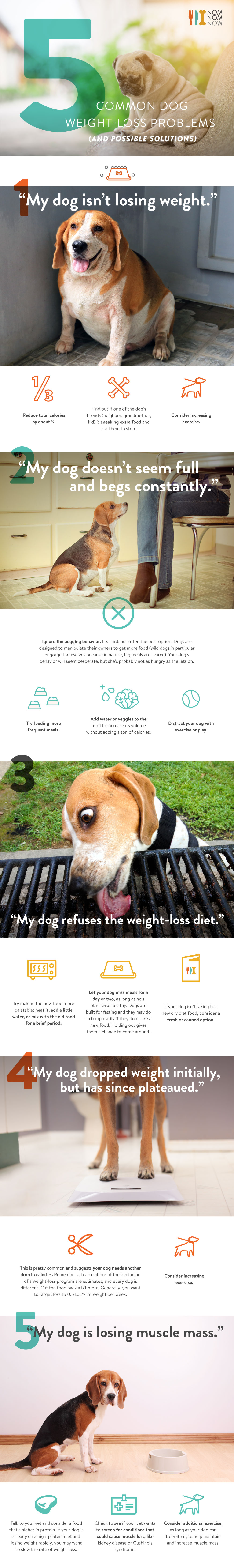 Common Dog Weight loss Problems