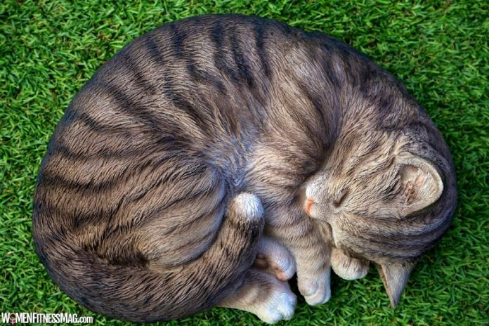 CBD Oil for Cats: All You Need To Know Today