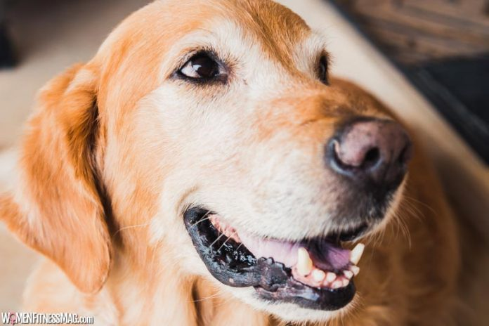 6 Reasons Why You Should Take Care of Your Pet's Teeth