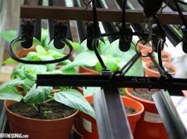 How to Design a Successful Vertical Farm