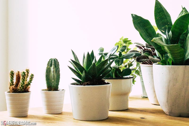 Some species of Succulents that do very well indoors