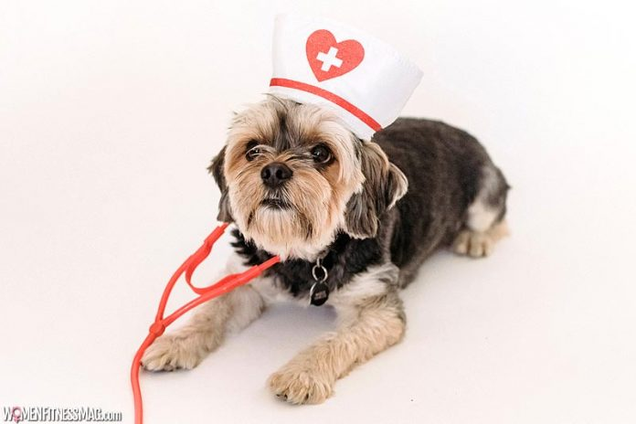 How to Handle a Pet Emergency