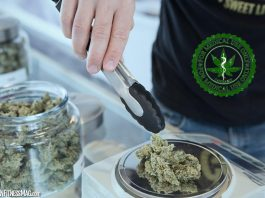 5 Reasons Why You Should Get a Medical Marijuana Card in Lafayette, Georgia